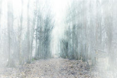 Mystical forest fog Royalty Free Stock Images
