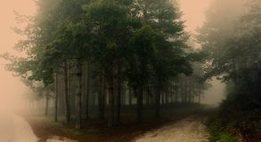 Mystical forest with fog. Amazing mystical forest with fog royalty free stock photography