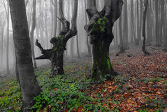 Mystical forest. Stock Photography