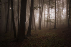 Mystical forest with fog and light Royalty Free Stock Photography