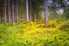 Mystical forest full of trees an green bushes Stock Images