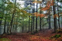 Mystical forest Stock Images