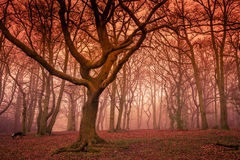 Mystical Forest In Autumn Stock Image