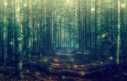 Mystical forest landscape. With magical green light royalty free stock photo