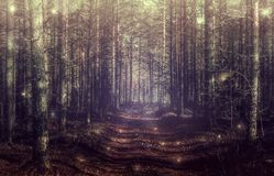 Mystical forest landscape with magical light. Mystical dark forest landscape with magical light stock images