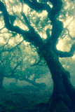 Mystical Forest Royalty Free Stock Image