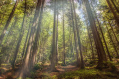 A mystical forest. With magical sunlight Stock Photography