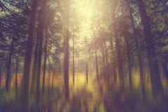 A mystical forest. With magical sunlight Stock Image