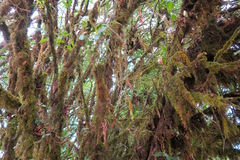 Mystical forest with moss on the branches Stock Photo