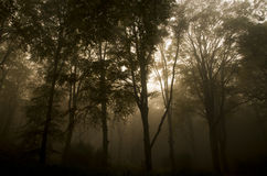 A Mystical forest. A photo of a A Mystical forest royalty free stock photos