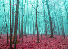 Mystical forest in red and turquoise Royalty Free Stock Photo