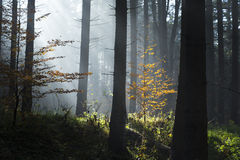 Mystical forest. Stock Photo