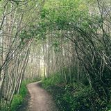 Mystical forest trail. Mystical forest with bending branches over forest pathway stock photos