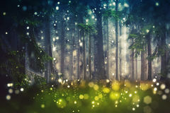 Forest Trees, Wood Glade - Mystic, Bokeh, Lens Flares, Camera Blur - Sunlight. Mystical Forest Trees on meadow wood Glade. Mystic ambiente. Bokeh camera lens stock images