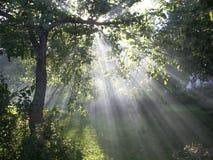 Mystical garden. Tree in sunlight Stock Images