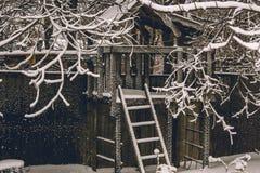 Mystical garden of frozen branches stock image