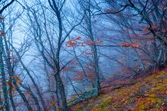 Mystical gloomy forest in the mountains in autumn. In the fog stock photography