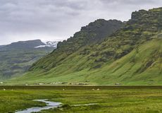 Mystical Icelandic landscape. Mystical Icelandic foggy green landscape stock photo