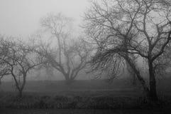 Mystical image, a rainy day Stock Photo