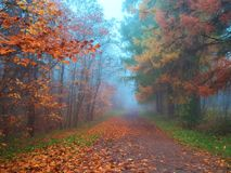 Mystical landscape with blue fog in autumn forest. Mystical landscape with blue fog in autumn forest stock image