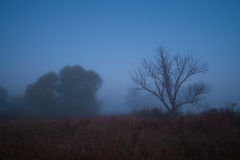 Mystical landscape in blue tones. Stock Photography