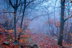 Mystical landscape, forest in the fall during the fog. Trees with bare branches stock photo
