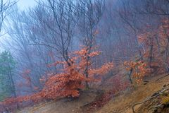 Mystical landscape - in the mountains on the slope of trees in the autumn overcast stock images