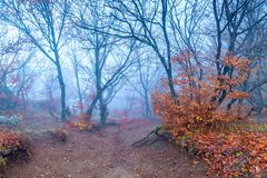 Mystical landscape of mountains, trees on a mountain in dense fog. In autumn royalty free stock photos