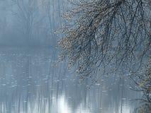 Mystical landscape of ponds, South Bohemia. Czech Republic Royalty Free Stock Photo