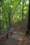 Mystical Landscape with staircase in the forest Royalty Free Stock Photo