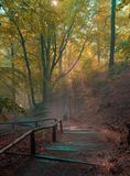 Mystical Landscape with staircase in the forest Stock Photography