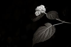 Mystical light. A selectively lit wild flower plant (tritone) in a dark toned background with copy space Royalty Free Stock Images