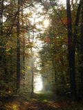 Mystical light in forest Stock Photos