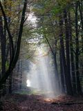 Mystical light in Forest Royalty Free Stock Photo