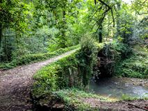 Mystical medieval bridge cover with nature in the middle of the forest in Pais Basco, Spain, on El Camino del Norte. Mystical medieval bridge covered with nature stock photo
