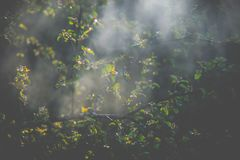 Mystical misty spring leaves royalty free stock photos