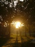 Mystical morning light. Between the trees stock image