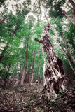 Mystical old tree in a dense forest Stock Photo