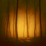 Mystical orange red forest Stock Photos