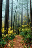 Mystical Path with Autumn Foliage. Path in forest with colorful autumn foliage stock image