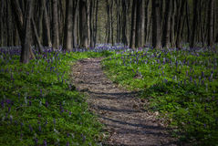 Mystical path in a dark forest Royalty Free Stock Photo