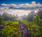 Mystical path in foggy mountains Stock Photo