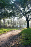 Mystical path in tropical forest stock image