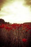 Mystical poppy field against illuminated cloudy sky Stock Image
