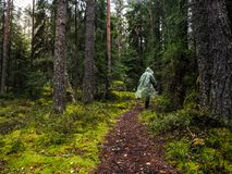 Mystical rain forest. Deep in the forest. The Forester goes on the trail through the dense forest. Mystical rain forest. The Forester goes on the trail through Royalty Free Stock Images
