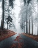 Mystical road with fir needles in a foggy and dark forest. Creepy natural background. Suitable for Horror, Halloween. Abstract, Wallpaper royalty free stock images