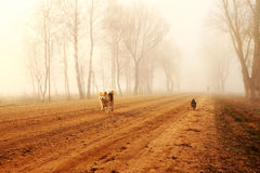 Mystical road in fog with dogs Royalty Free Stock Photos