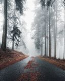 Mystical road in a foggy forest. royalty free stock images