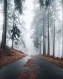 Mystical road in a foggy forest. stock photo