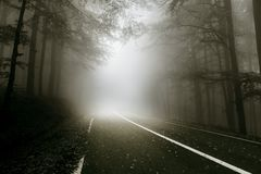 Mystical road through the forest. Beautiful dark atmosphere with mysterious fog royalty free stock images